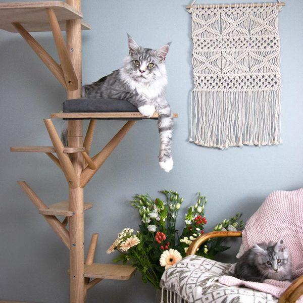 Arbre à chat design en bois avec Mainecoon