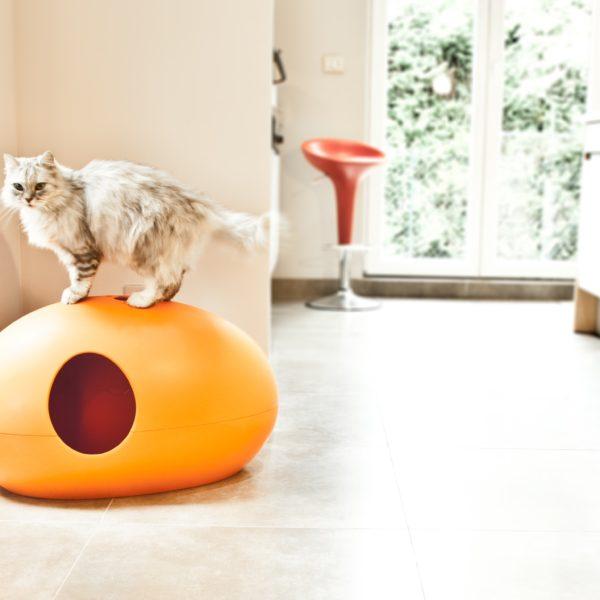 Litière PooPooPeDo et chat persan