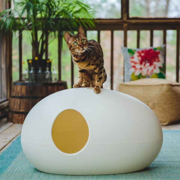 Litière pour chat Poopoopeedo et chat bengal
