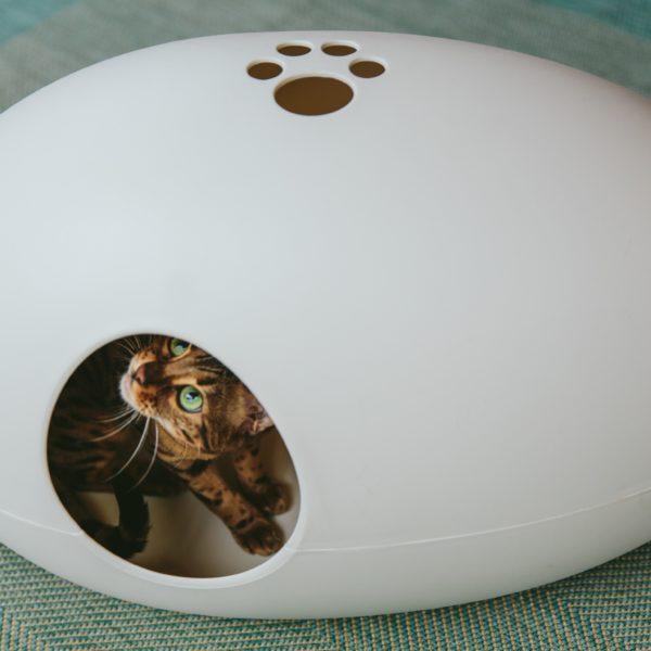 Litière pour chat Litière pour chat Poopoopeedo et chat bengal
