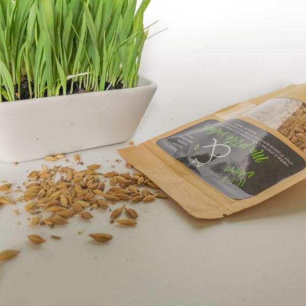 Herbe à chat biologique à semer