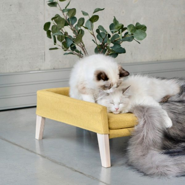 Couchage pour chat couleur moutarde