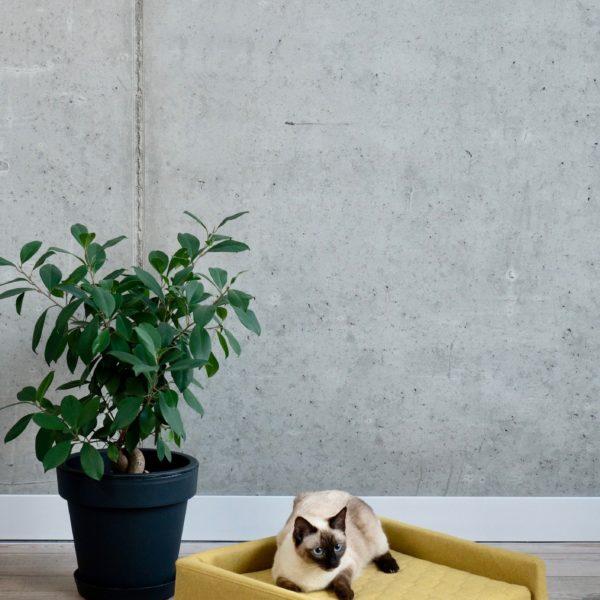 Couchage pour chat couleur moutarde avec chat siamois