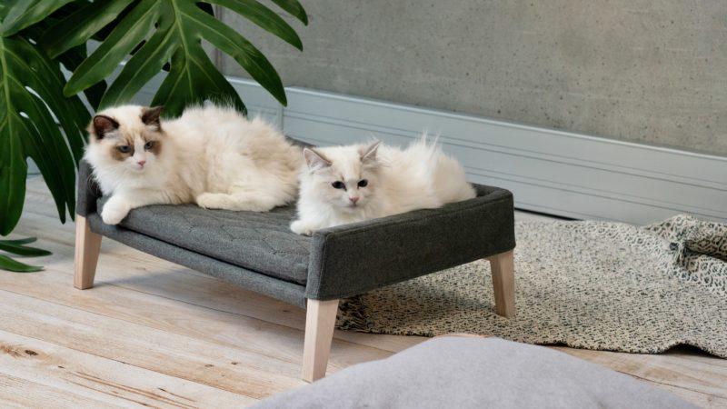 Couchage pour chat couleur gris anthracite avec 2 chats sacrés de Birmanie