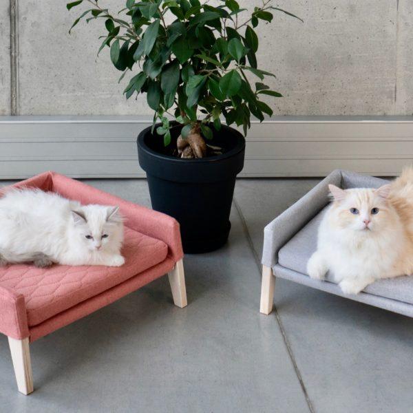 Couchage pour chat couleur gris anthracite et rose avec 2 chats sacrés de Birmanie